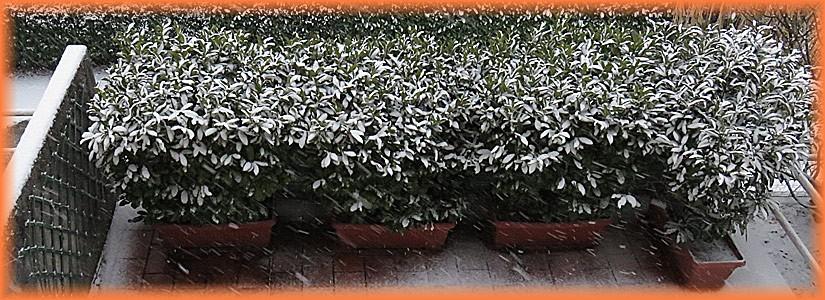 neve a Cividale